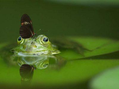 biodiversität am beispiel von frosch und schmetterling